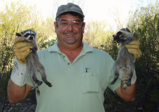 Pack Rat Elimination Trapping Removal And Control